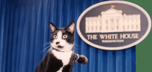 Socks era muy famoso en la Casa Blanca y de ahí que se creara el Día Internacional del Gato