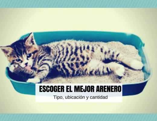 como escoger el mejor arenero para tu gato