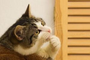 que piensan los gatos | Foto: hoschie.deviantart.com/