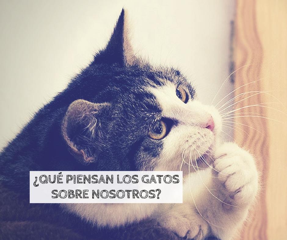 que piensan los gatos sobre humanos