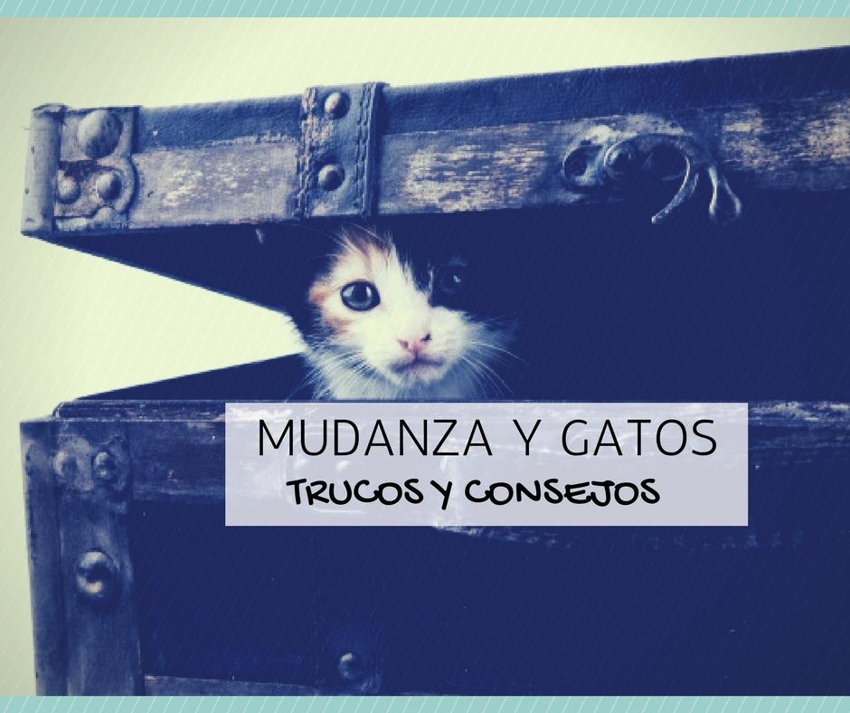 mudanza gatos: trucos y consejos
