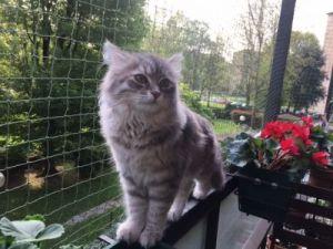 Proteger al gato con mosquiteras | Foto: zooplus