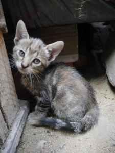 El gatito no puede regular su temperatura solo | Foto: pexels.com Cristian Loayza