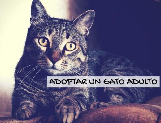 Razones para adoptar un gato adulto | Foto: Pexels.com