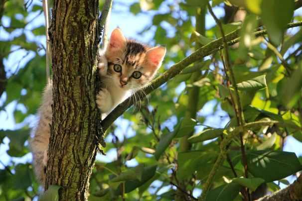 División del territorio felino en gatos domésticos | Foto: pexels.com/photo/low-angle-view-of-cat-on-tree-257532/