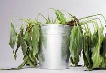 como saber si tu planta está muerta