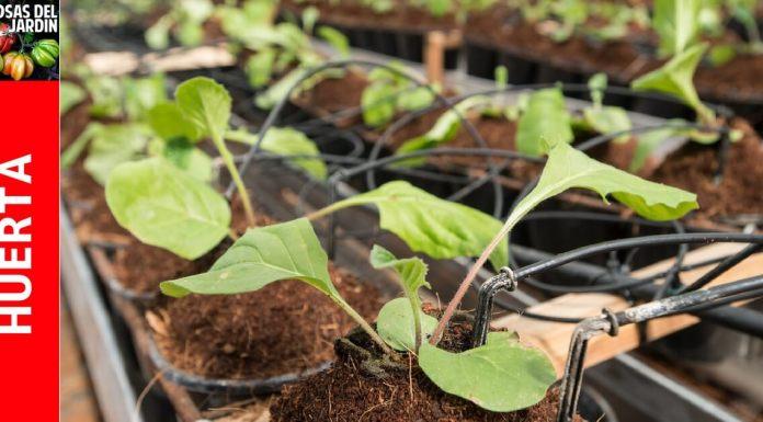 poco riego en plantas