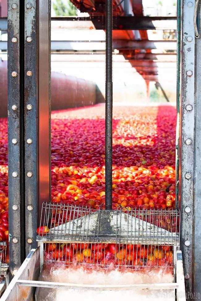 Conoscere ciò che compriamo. La strada del pomodoro dall'orto alla cucina.