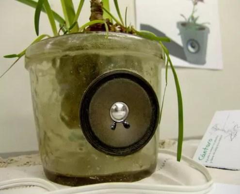 piante-canterine
