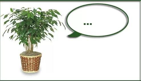 piante-che-pensano