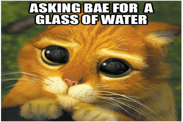 cat asking for glass of water