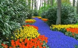 Un-fiume-di-muscaridi-tra-i-tulipani-a-Pralormo