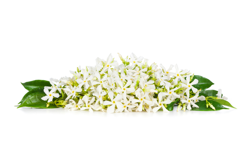 neroli flowers