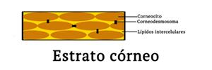 Representación de las estructuras del estrato córneo y como los retinoides afectan a los corneodesmosomas