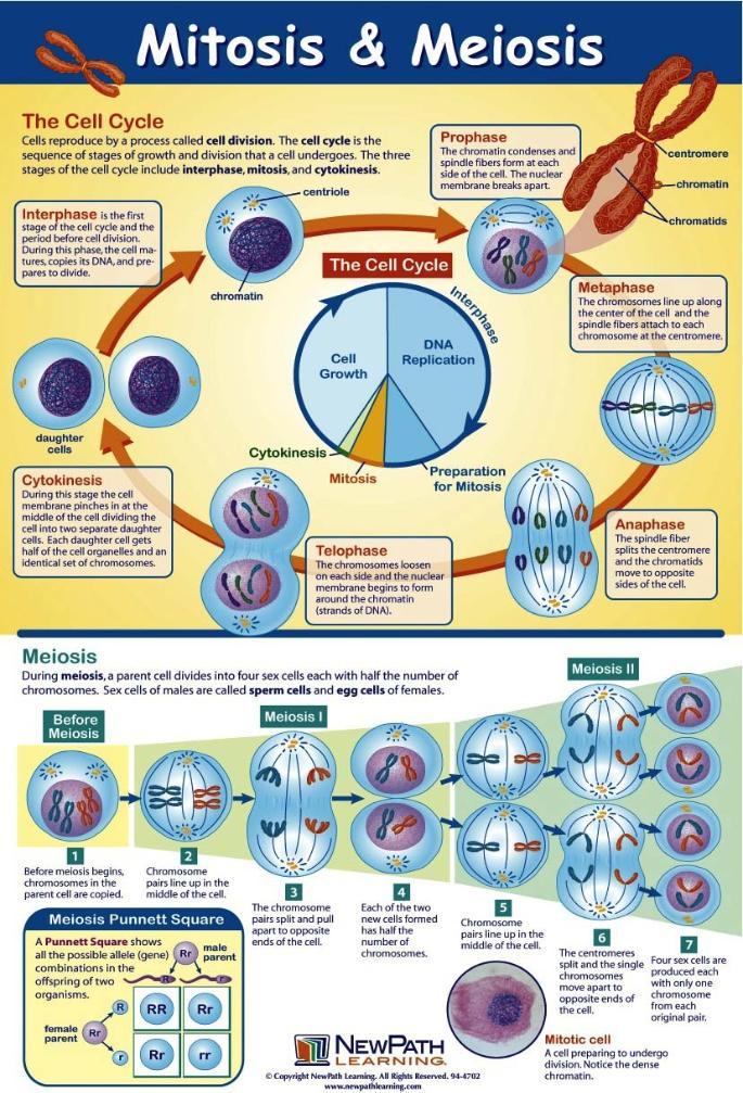 plant cell diagram 9th grade