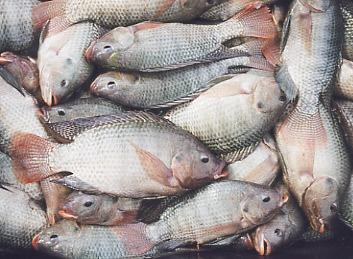 fish-skin-bikini01.jpg
