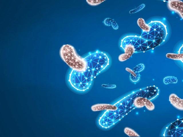 Prebiotici e probiotici cosa sono