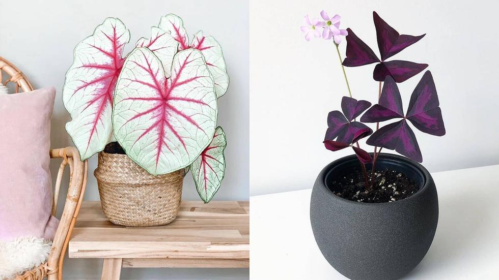Best Indoor Plants To Buy Online If You Want To Bring The Outside In Cosmopolitan Middle East