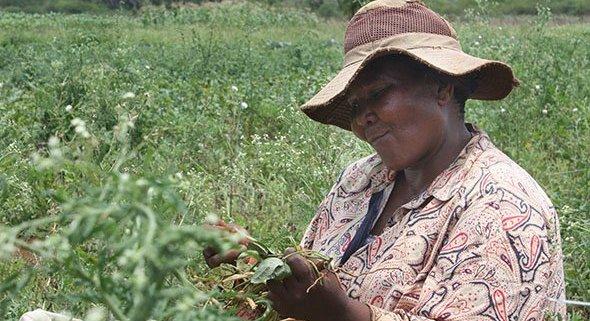 Naturasì e COSPE per sostenere l'agricoltura nel Lubombo