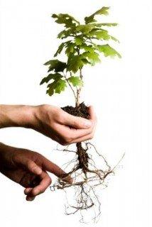 tree1-214x320