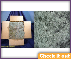 Real Spanish Moss (cleaned).