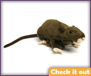Large Plush Rat.