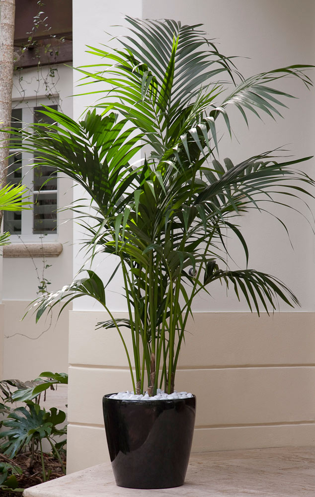 The Best Indoor Plants For Clean Air And Low Light