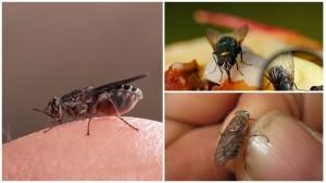 8-mosche-su-corpo-umano