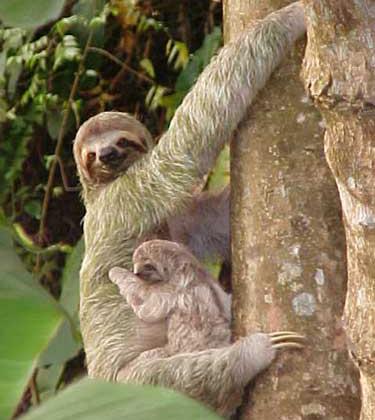Monteverde Costa Rica Vacation
