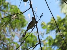 Bird at Barco Quebrado Beach Costa Rica