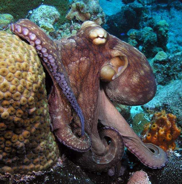 Image Huge Octopus Head