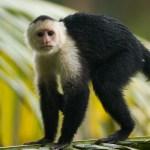 vida verde monkeys