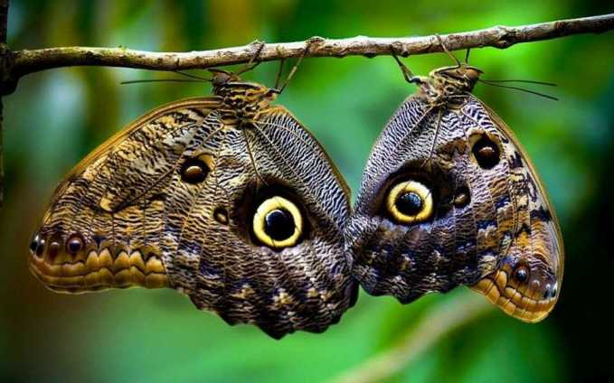 costa-rica-wildlife-butterflies