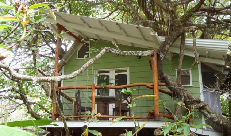 Playa-Selva-Tree-House
