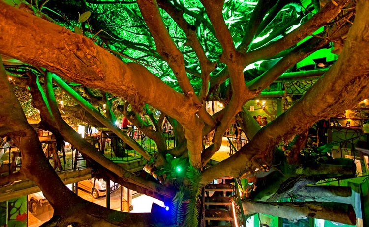 Tree House Restaurant and Cafe