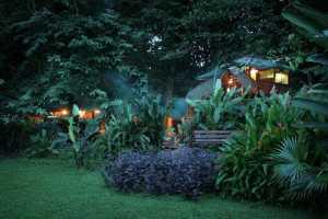 tree-house-lodge-tree-houses