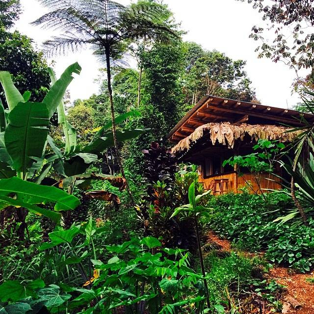 Finca Tierra Organic Permaculture Farm & Eco-Lodge