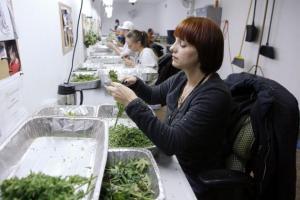 colorado legal pot industry