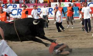 costa rica zapote bull fights