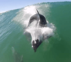 dolphin-body-slam 1