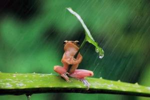 rainy season costa rica 1