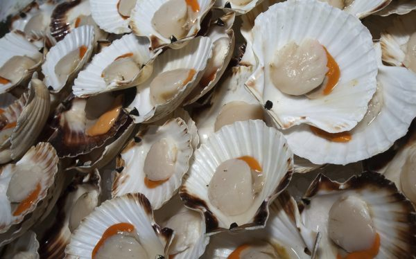 What's the Difference Between Bay and Sea Scallops?