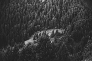 wild_forest1 wild_forest1