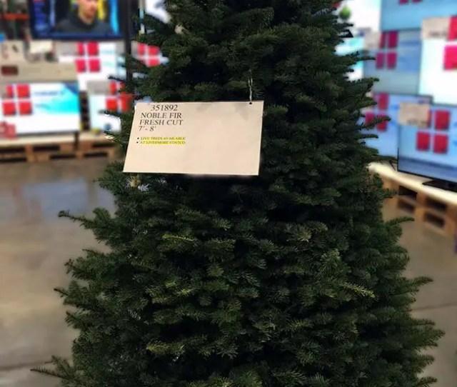 Costco Real Christmas Tree
