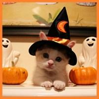 happy halloween cat photo