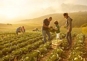 Bando Regione Marche per Interventi in favore delle imprese agricole
