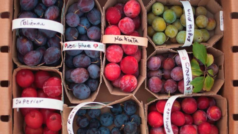 Fruits de nos producteurs locaux