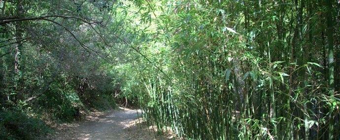 Les Bambous du Mandarin