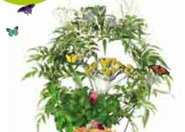 Exposition 5 plantes dans tous les sens