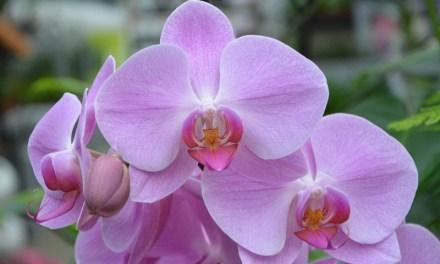 Stage de culture des orchidées le 31 mars 2018